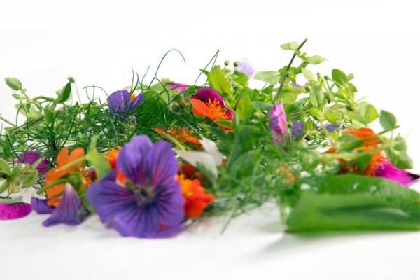 BIO Wildkräuter Salat